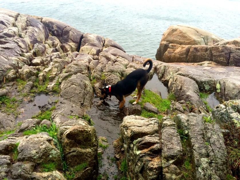 dog-rocky-beach