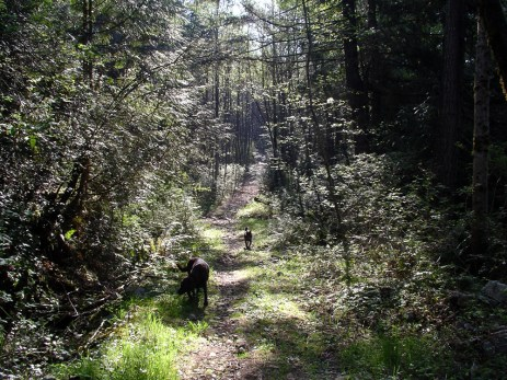 dogs-on-sunny-trail