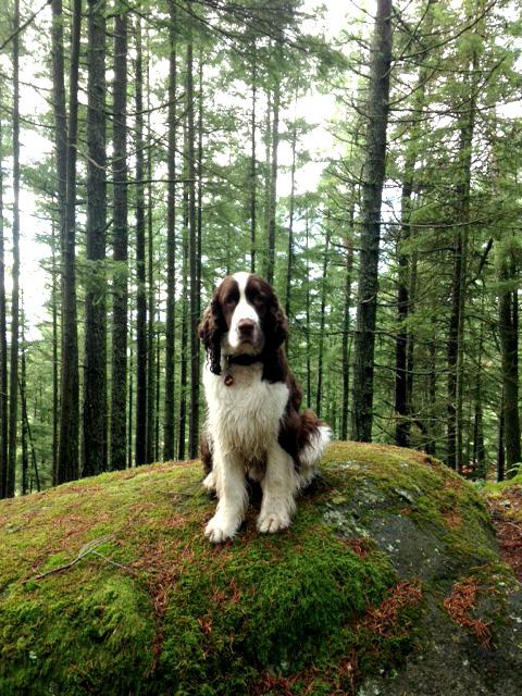 mossy-rock-dog