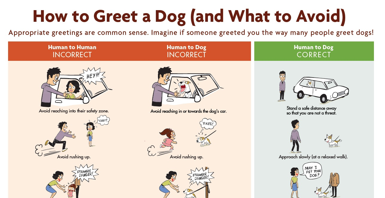 How to greet a dog properly furry friends rescue blog dogbitepreventionposter m4hsunfo