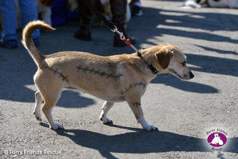 woofstock2013-dog-costume1
