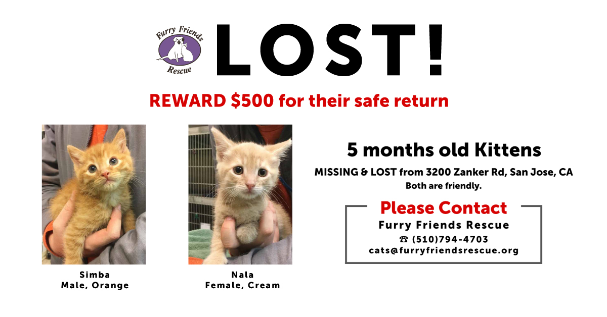 LOST Kittens $500 REWARD