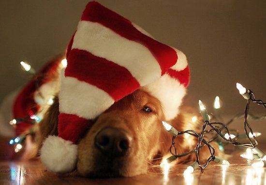Santa Pictures December 1st Friday Fur The Love Of Dogs