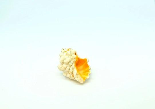 海で拾った小さな貝殻。ゴミをインテリアに生かす-ふるものせいかつ図鑑
