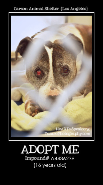 CarsonJune9  17 Shady {16 year old dog abandoned}