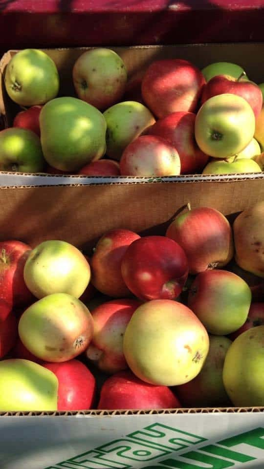Apples from The Farm
