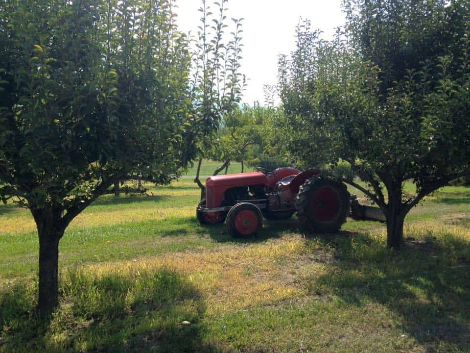 Tractor in Spring