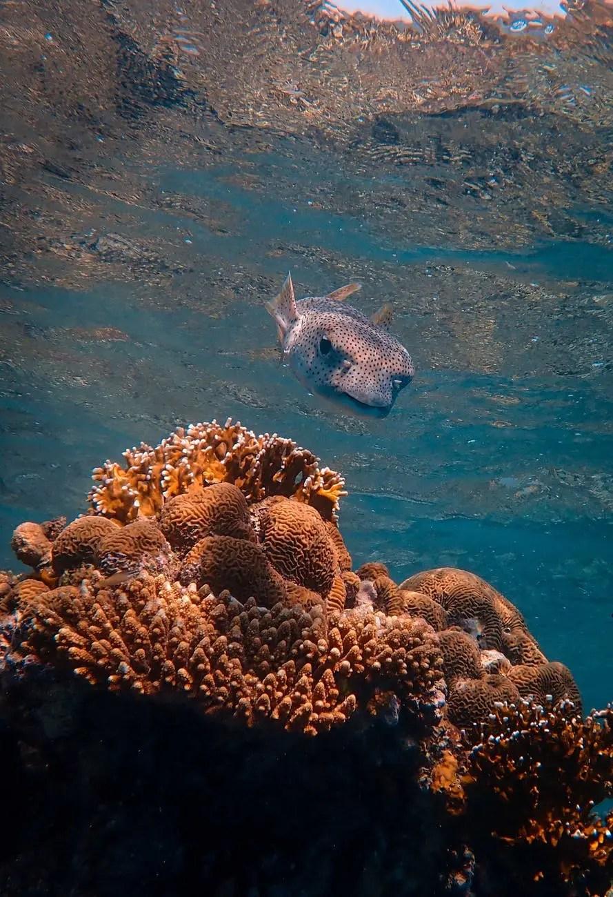 exotic fish swimming near coral reef in sea