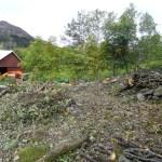 Bilde av tomta uten trær