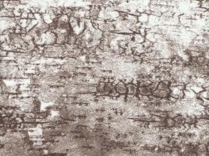 Birch Bark Full Fulton Cover