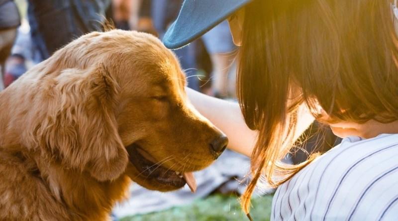 pets lifestyle humans