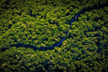 A Trillion Trees and Amazon