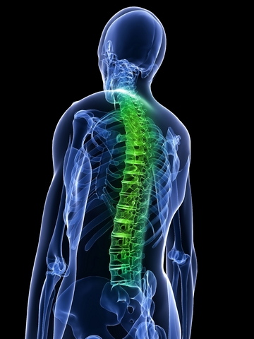 stem cells spinal cord injuries future medicine