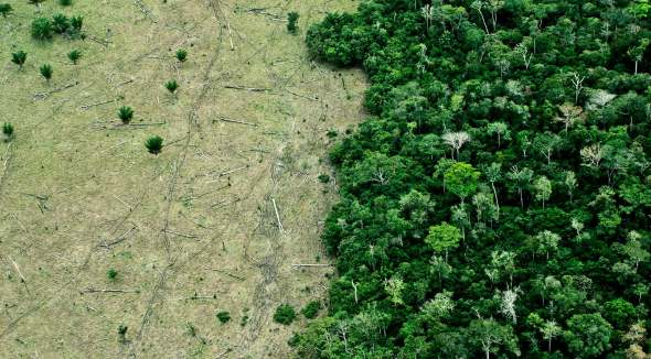 https://i1.wp.com/www.futurity.org/wp/wp-content/uploads/2017/09/deforestation-from-air_1600.jpg?resize=590%2C326&ssl=1