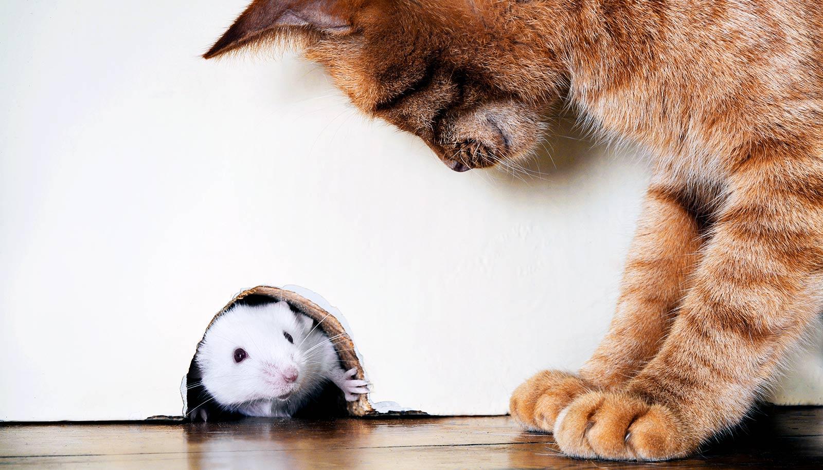 Serotonin Guides Fight Or Flight Response In Mice