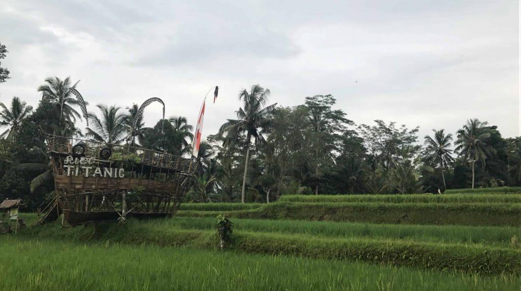 Champ de rizière Bali