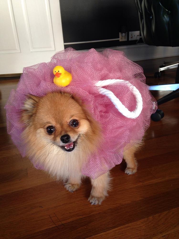 dog dinosaur costume diy