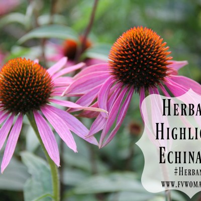 HerbanU Highlight: Echinacea