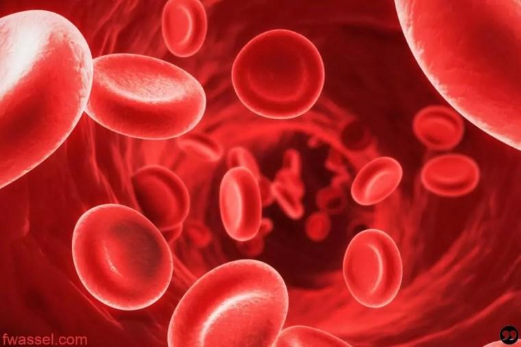 ماهي أنواع فقر الدم (الأنيميا)؟