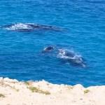 Whales season