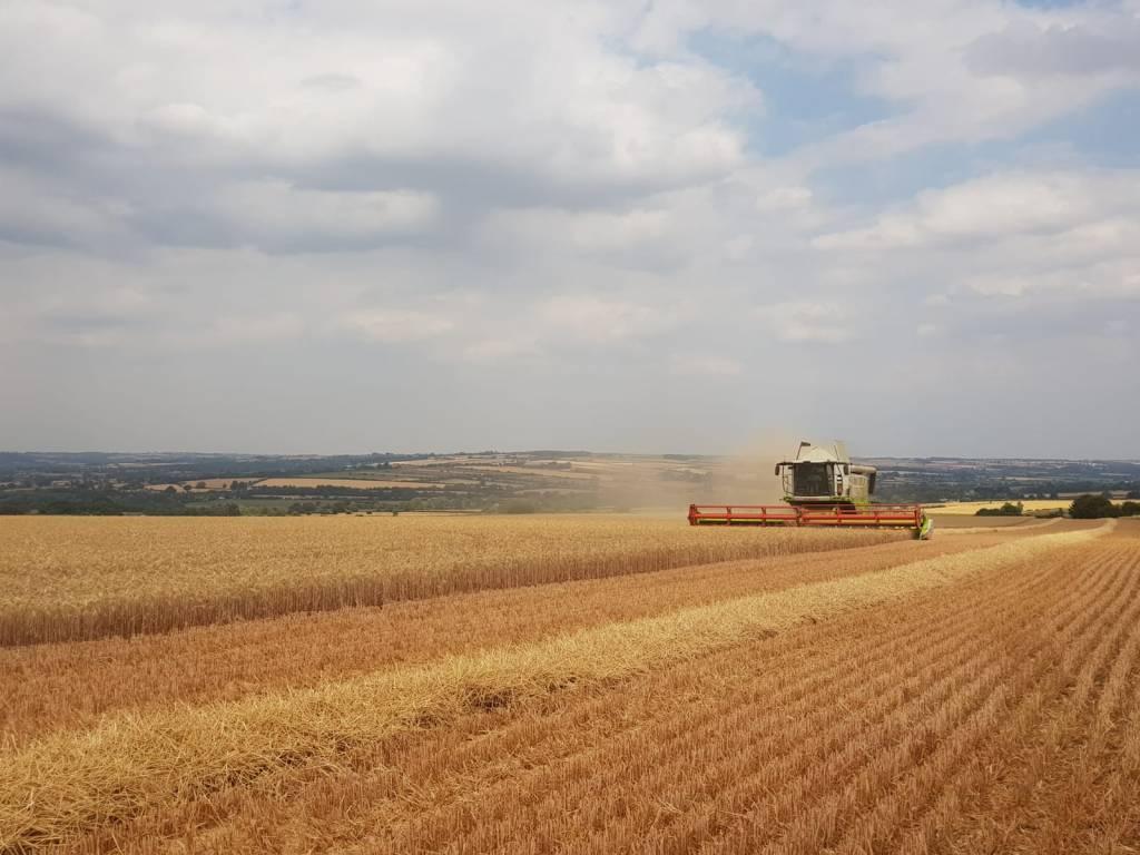 Combine harvester on the Swinbrook Estate
