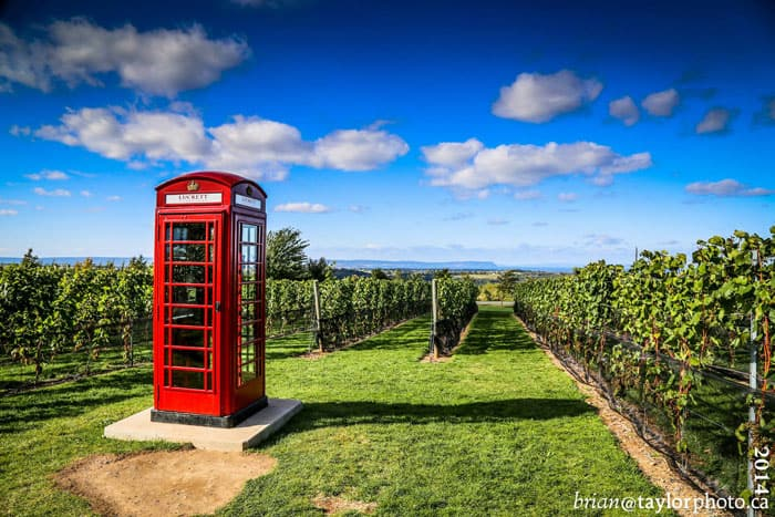 Lucketts Vineyard - red phone booth
