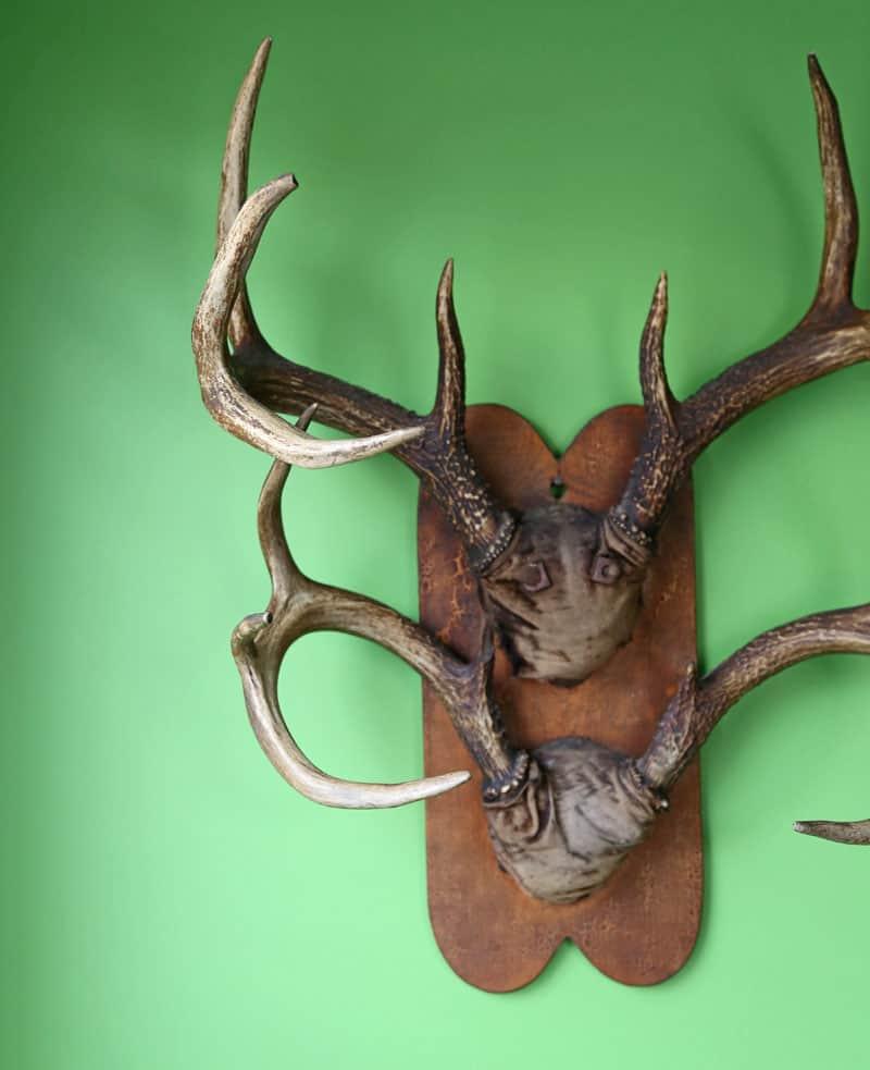 Vintage antlers from 1940