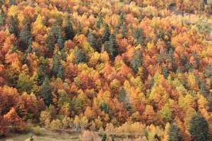 Herbst Pyrenaen