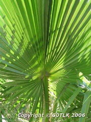 Backlit tropical leaf
