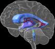3d_brain