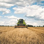 România, locul șase în UE la producția de grâu în 2020/ Recolta este mai mică cu aproape 4 milioane de tone față de anul precedent, din cauza secetei