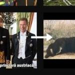 PSD, atac la Klaus Iohannis cu colaje foto pe tema împușcării ursului Arthur/ Epic fail: PSD a greșit poza