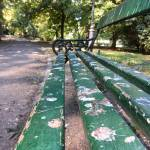 Numărul ciorilor și porumbeilor, în continuă creștere în București / Ornitolog: vina e a noastră, pentru le dăm de mâncare și lăsăm gunoaiele peste tot