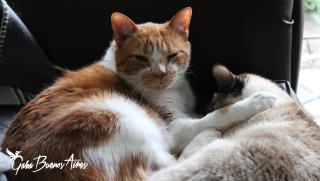 Todo lo que aprendí de soltar… me lo enseñaron mis gatos