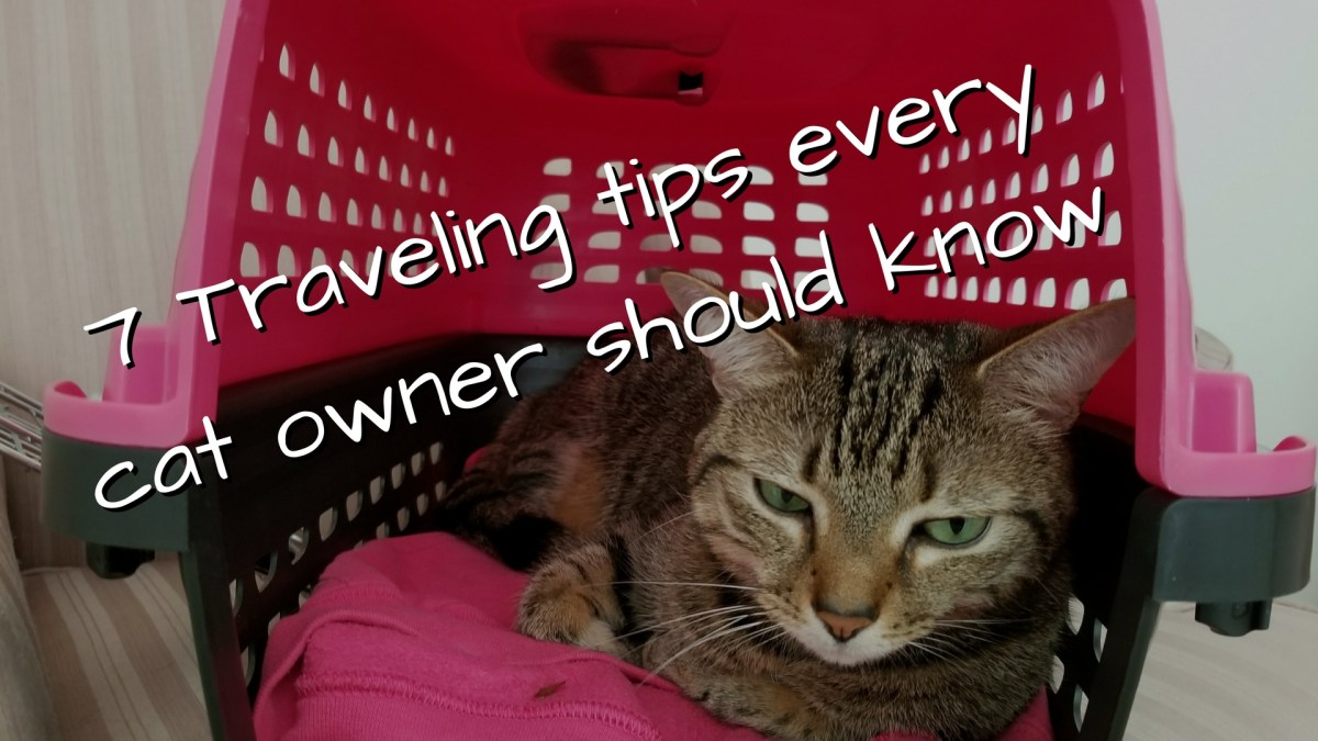 7 Traveling Tips Every Cat Owner Should Know