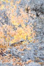 GHarhoff_Boring Brush_1606-10 thumbnail