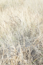 GHarhoff_Boring Brush_1606-14 thumbnail