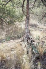 GHarhoff_Boring Brush_1606-9 thumbnail