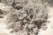 GHarhoff_Lonestar-14 - Kopie thumbnail