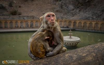 india nikon school viaggio fotografico workshop paesaggio viaggi fotografici 00009