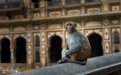 india nikon school viaggio fotografico workshop paesaggio viaggi fotografici 00010