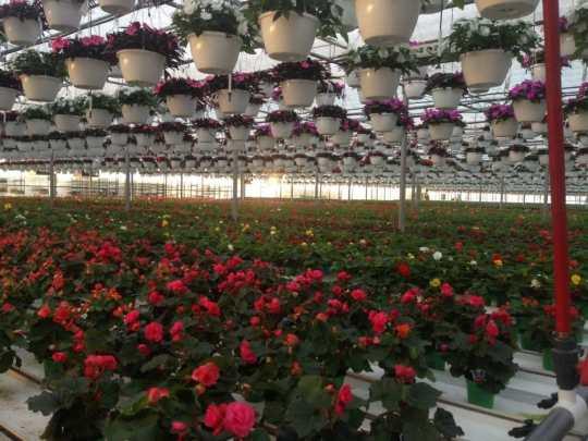 Greenhouses 3