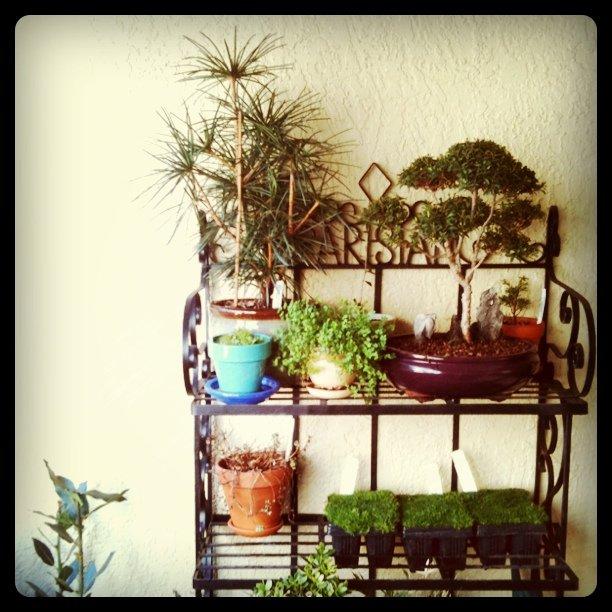 Balcony garden w/ new Irish moss micro lawn