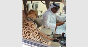 Dubai 12