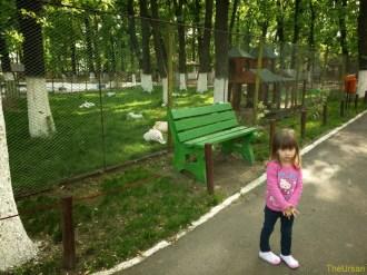 Sara la Zoo Braila Romania 1