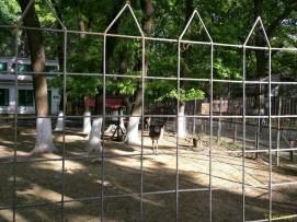 Sara la Zoo Braila Romania 13