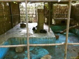 Sara la Zoo Braila Romania 19
