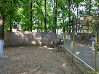Sara la Zoo Braila Romania 22