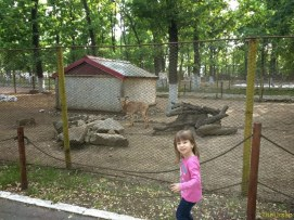 Sara la Zoo Braila Romania 29