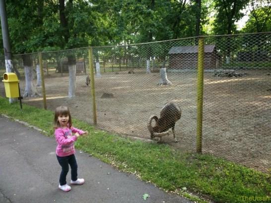 Sara la Zoo Braila Romania 31